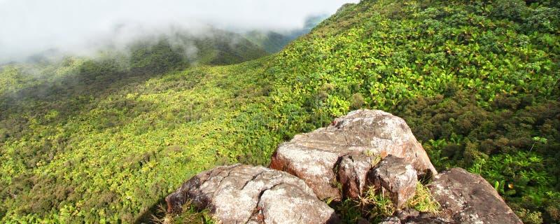Selva tropical Puerto Rico del EL Yunque fotos de archivo