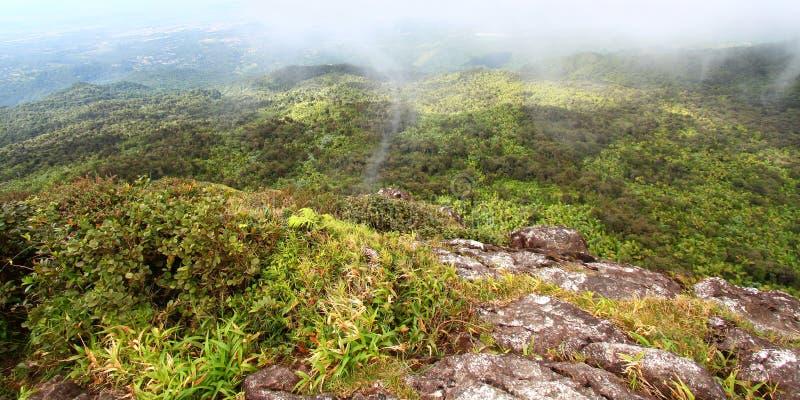 Selva tropical puertorriqueña foto de archivo libre de regalías