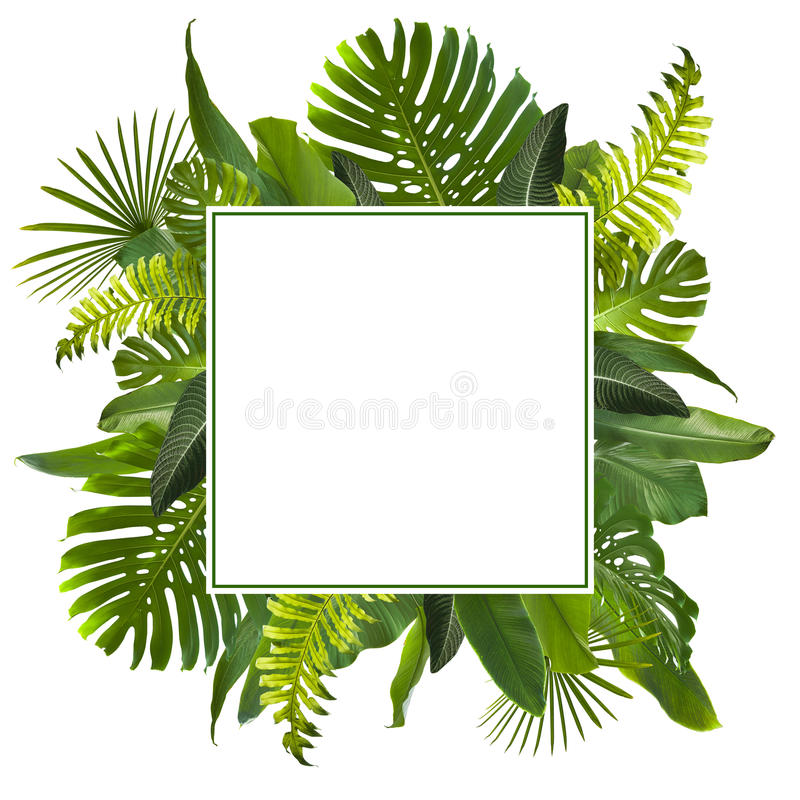 A selva tropical sae do fundo fotos de stock