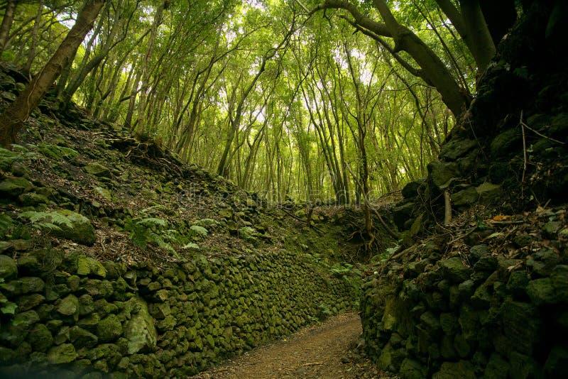 Selva tropical subtropical en la isla del La Palma, islas Canarias fotos de archivo