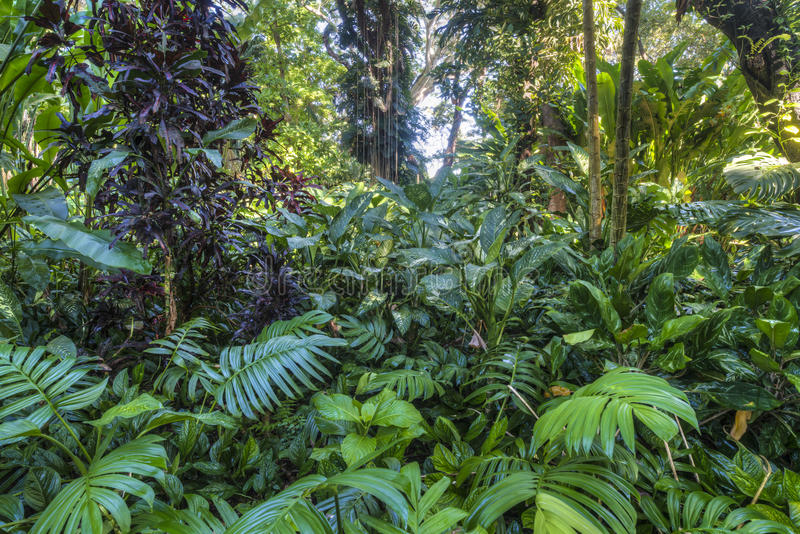 Selva tropical tropical imagen de archivo
