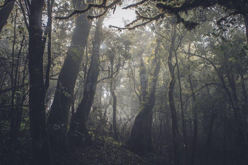 Selva tropical tropical en la oscuridad fotografía de archivo libre de regalías