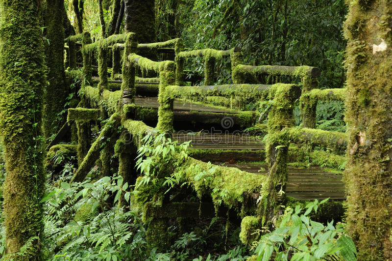 Selva tropical tropical enorme. fotografía de archivo libre de regalías