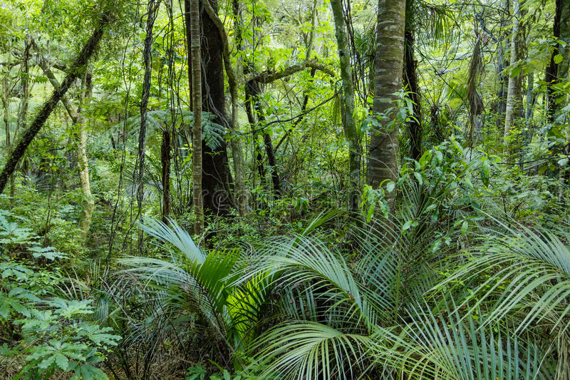 Selva tropical verde enorme imagen de archivo libre de regalías