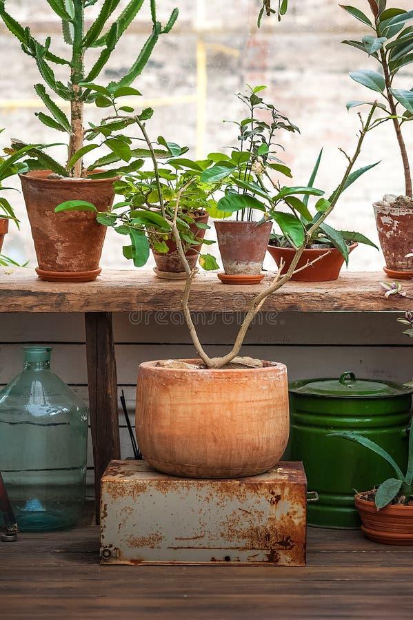 Selva urbana Invernadero con las plantas, flores Jard?n en la casa, plantas de trasplante imagen de archivo