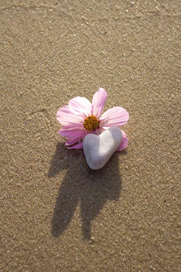 Selvaggio è aumentato sulla spiaggia con una roccia a forma di cuore fotografia stock