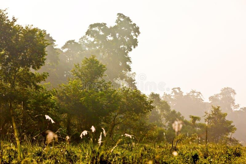 Selvas de Chitwan imagem de stock royalty free