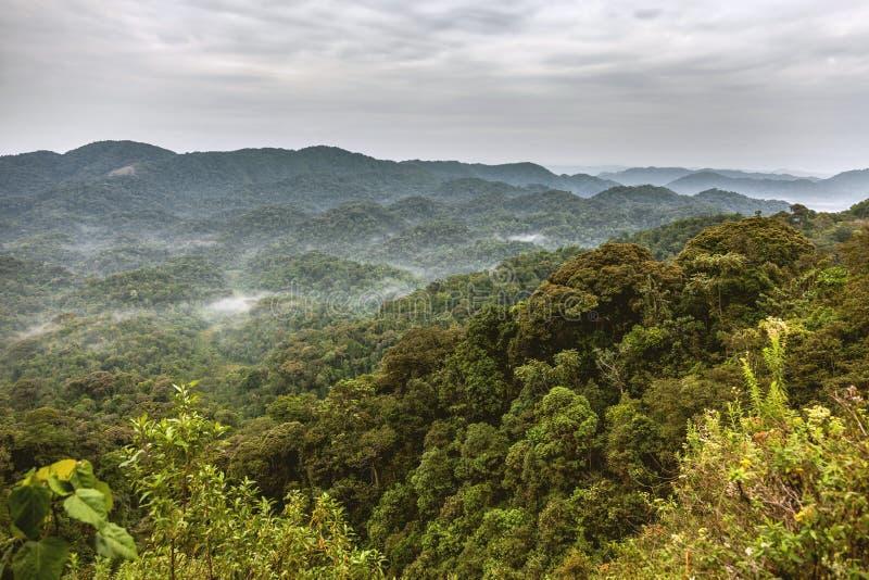 Selvas tropicales de Rwanda imagen de archivo libre de regalías