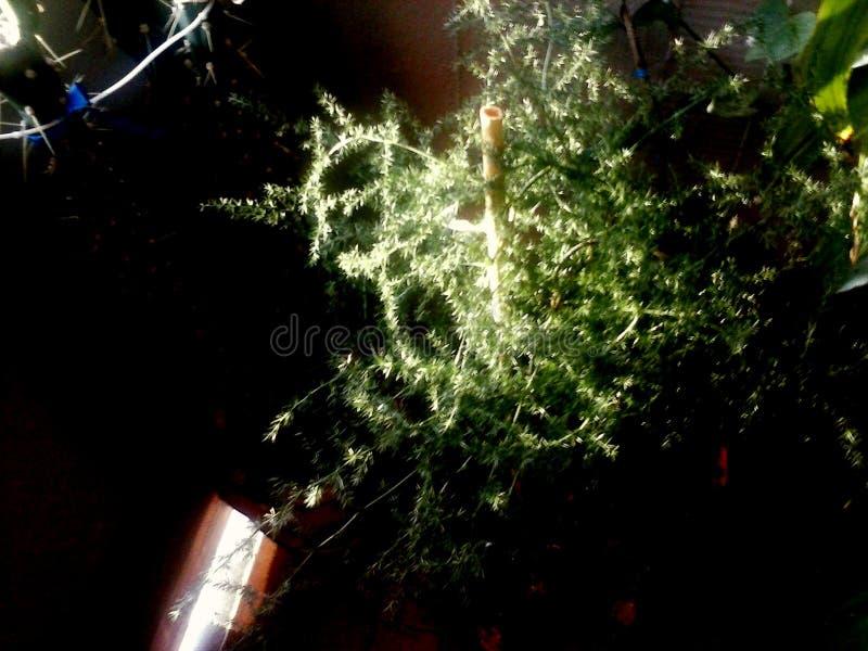 Selvatico di Asparago fotografia stock libera da diritti