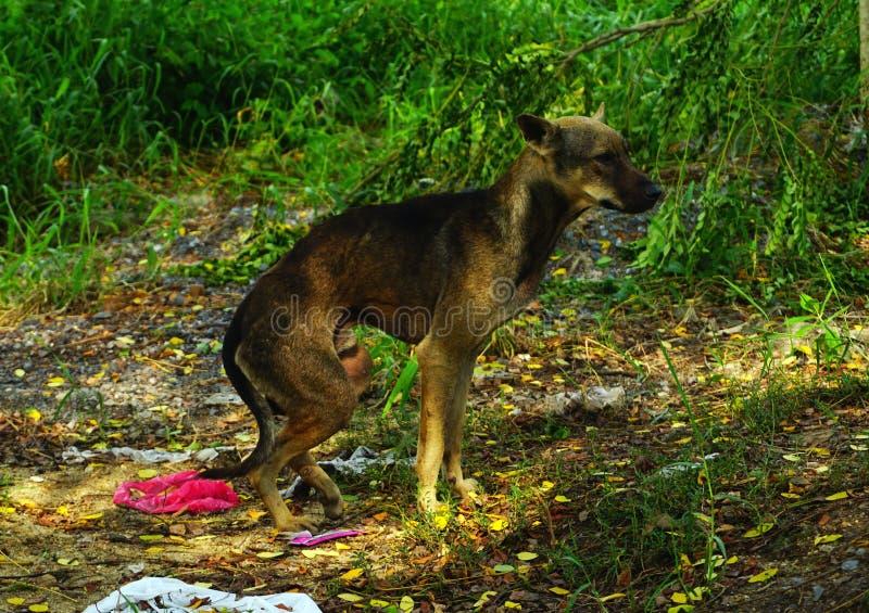Sem abrigo com fome do cão disperso fotografia de stock royalty free