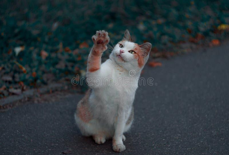 Sem abrigo, mas gato franco que diz o olá! fotografia de stock royalty free