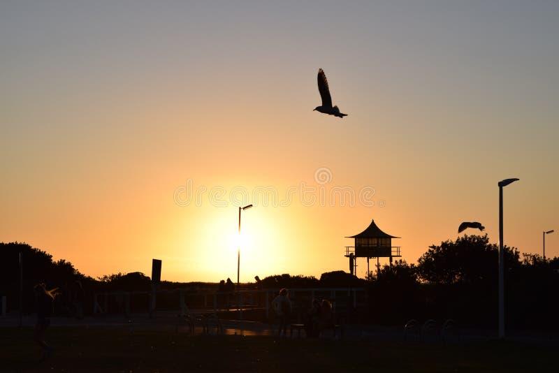 Semafor plaża - Adaleide Australia obrazy royalty free