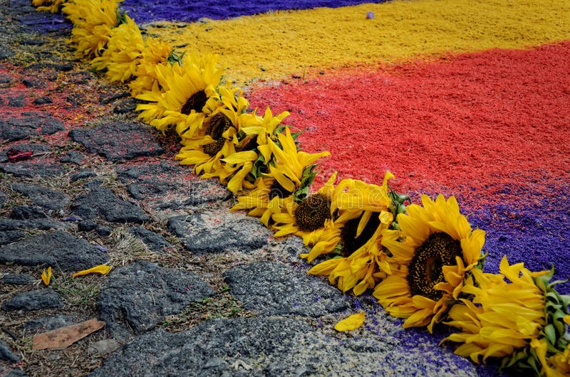 Semana Santa Carpet Sunflowers arkivbilder