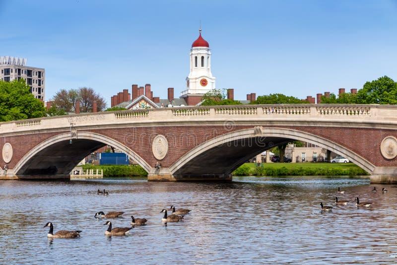 Semanas puente de Juan W Las semanas tienden un puente sobre y la torre de reloj sobre Charles River en Harva fotografía de archivo libre de regalías