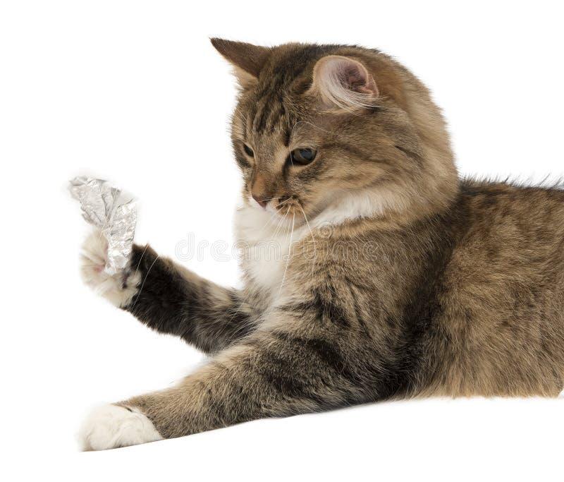 Sembler le chaton gris avec du chocolat coloré Pâques images stock