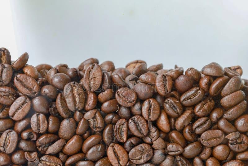 Seme alto vicino del caffè per fondo ed il modello fotografie stock libere da diritti