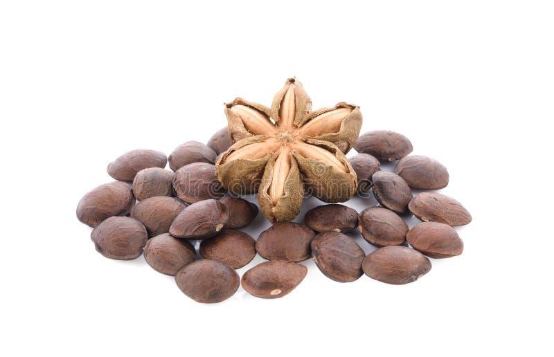Seme dell'arachide di inchi di Sacha su fondo bianco fotografie stock libere da diritti