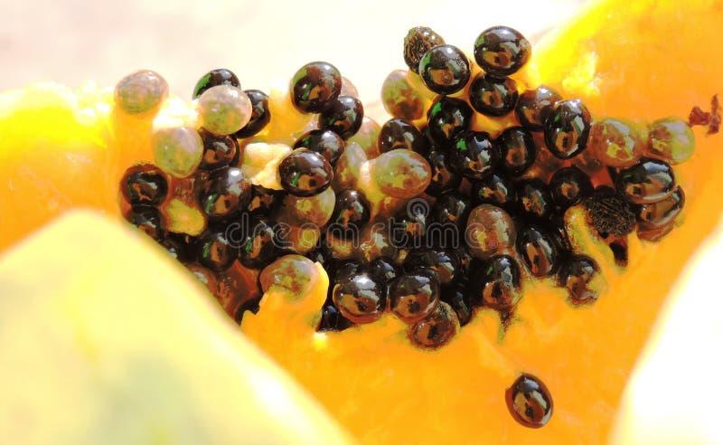 Seme della papaia fotografia stock libera da diritti