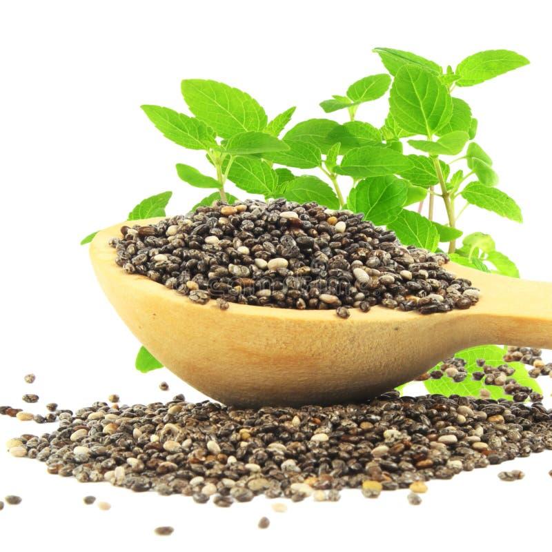 Seme di Chia in cucchiaio di legno con la pianta di chia nel fondo bianco puro immagine stock