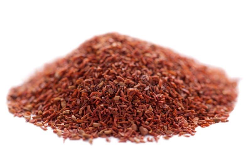 Seme di eucalyptus pellita (mogano rosso) immagini stock