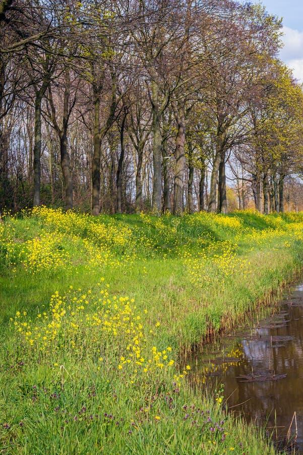 Seme di ravizzone giallo ed altre piante selvatiche che fioriscono sul pendio di un argine fotografia stock