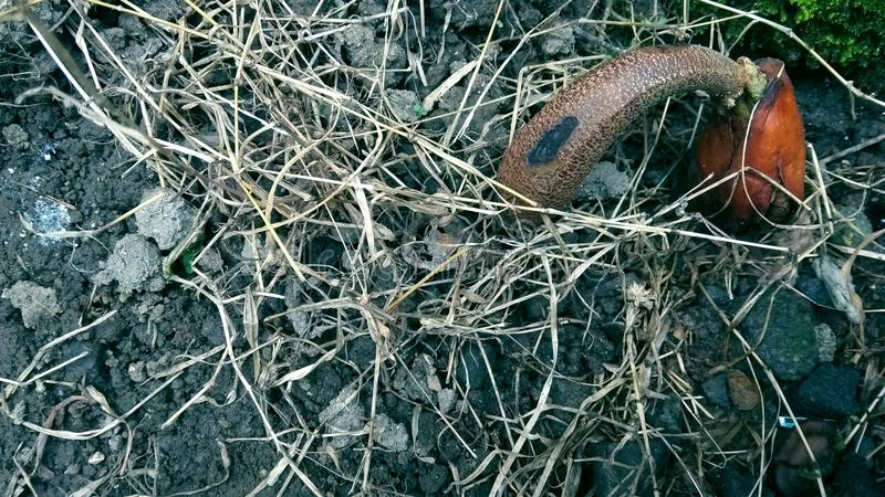 Seme e l'erba asciutta fotografie stock libere da diritti