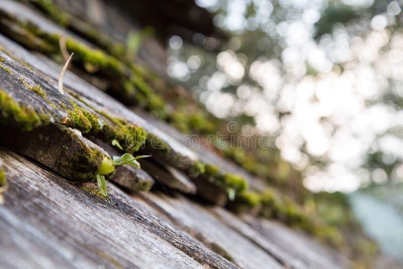 Seme germogliante sul tetto di legno fotografie stock libere da diritti