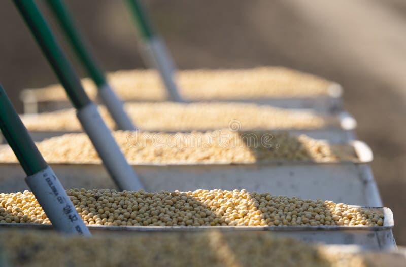 Semeando colheitas em campos agrícolas na mola imagem de stock
