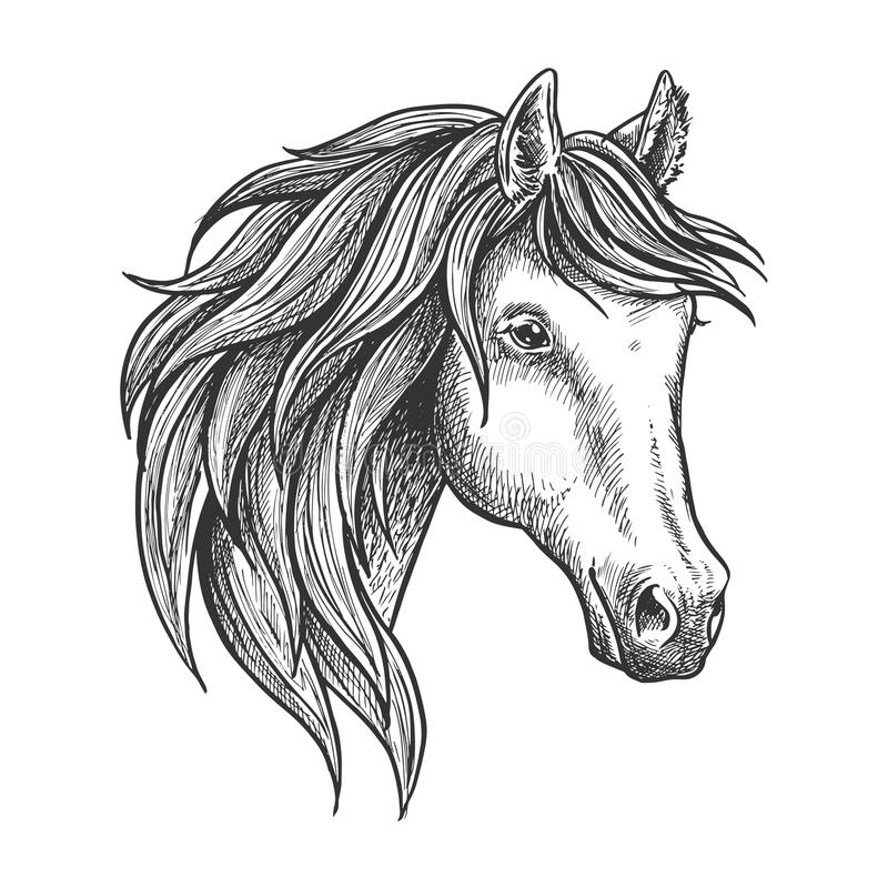 Semental criado en línea pura del bosquejo andaluz de la raza ilustración del vector