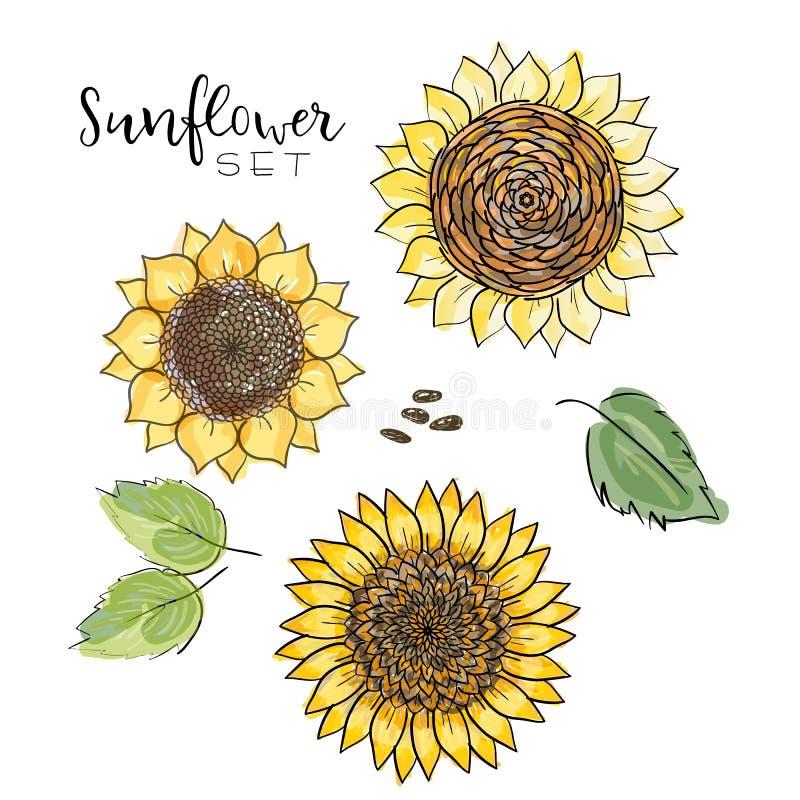 Semente de girassol, grupo do desenho do vetor da flor Ilustração isolada Handdrawn Ingrediente de alimento para o projeto de emp ilustração royalty free