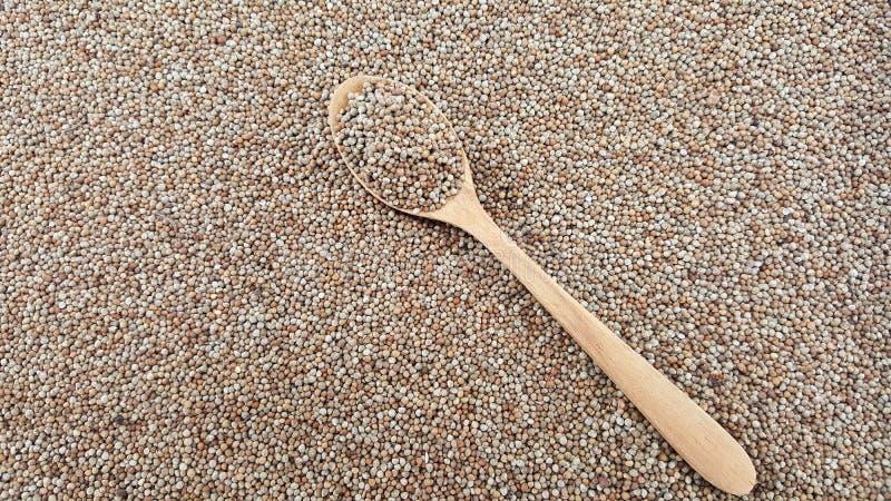 Semente do Perilla (semente de Shiso) no fim acima da vista com colher de madeira foto de stock