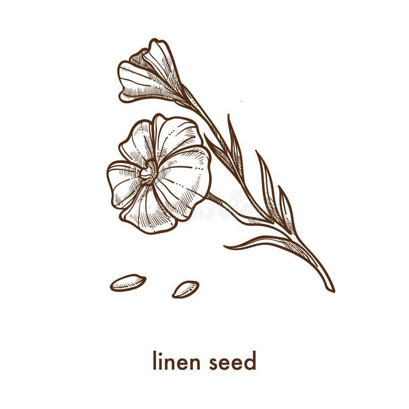 Semente e flor de linho no esboço fino do monochrome da haste ilustração stock