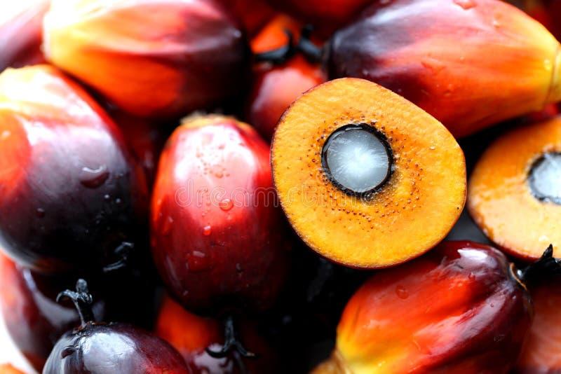 Semente oleaginosa de palma com estrutura da semente foto de stock royalty free