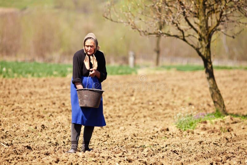 Sementeira velha da mulher do fazendeiro imagem de stock