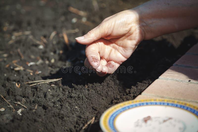 Sementes da sementeira da mão no close-up à terra imagens de stock royalty free