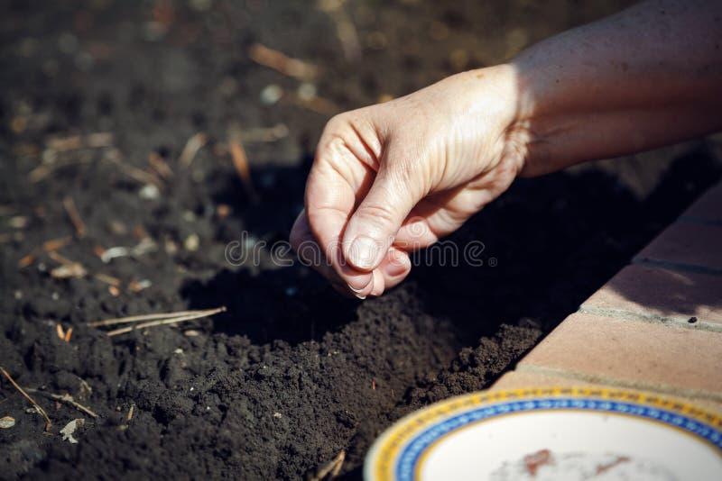 Sementes da sementeira da mão no close-up à terra fotos de stock