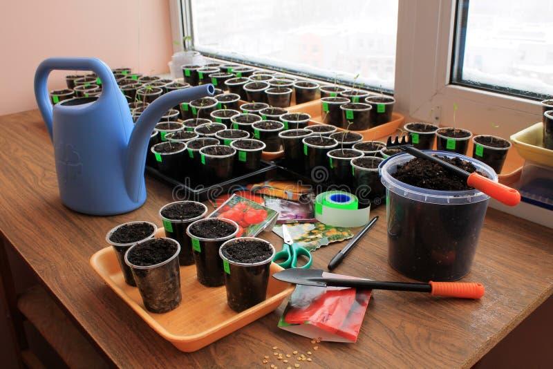 Sementes da sementeira do tomate e da pimenta para a plântula com as ferramentas de jardim do uso closeup fotos de stock
