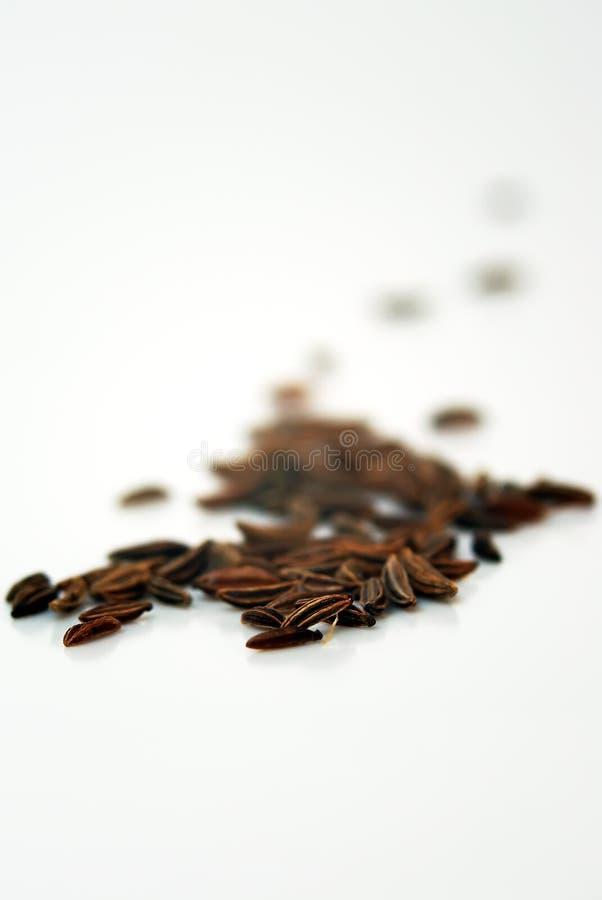 Download Sementes de alcaravia imagem de stock. Imagem de sementes - 16851255