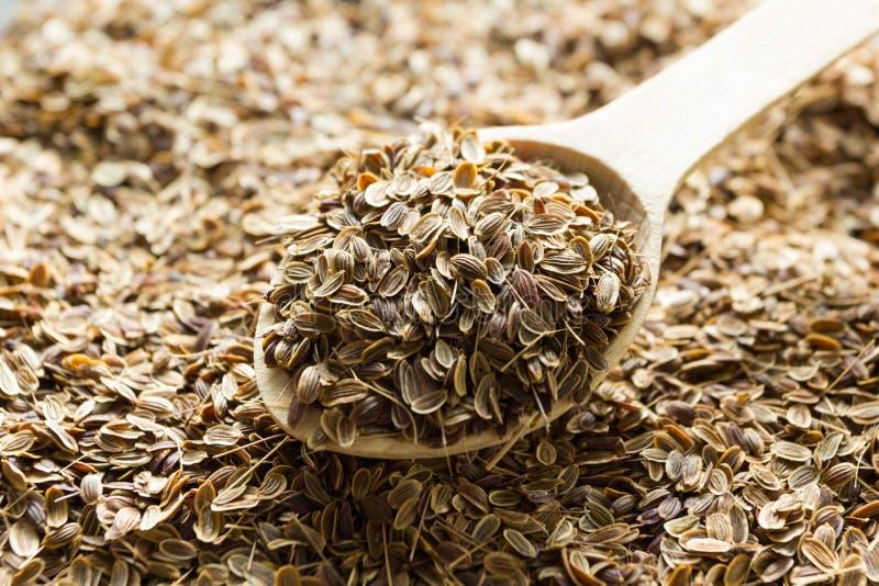 Sementes de aneto orgânicas secas em uma colher de madeira, estilo de vida saudável foto de stock royalty free