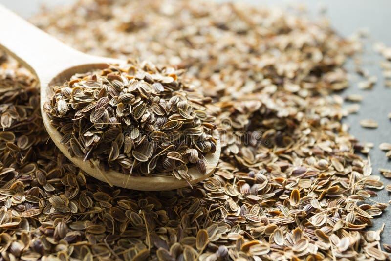 Sementes de aneto org?nicas secas em uma colher de madeira, medicina alternativa imagem de stock