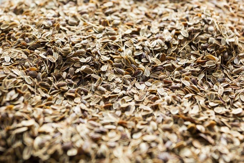 Sementes de aneto orgânicas secas, fundo foto de stock royalty free
