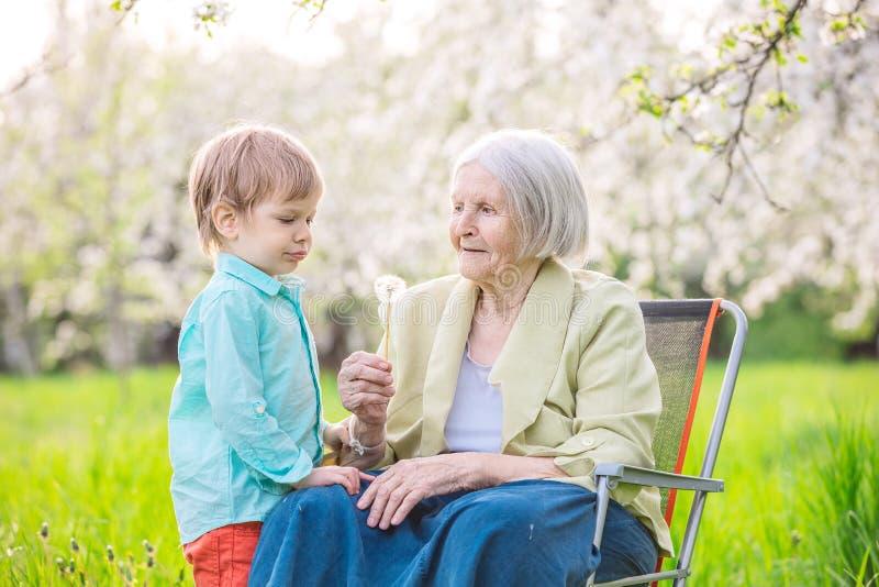 Sementes de sopro do dente-de-leão do menino quando sua bisavó guardar uma flor imagem de stock royalty free