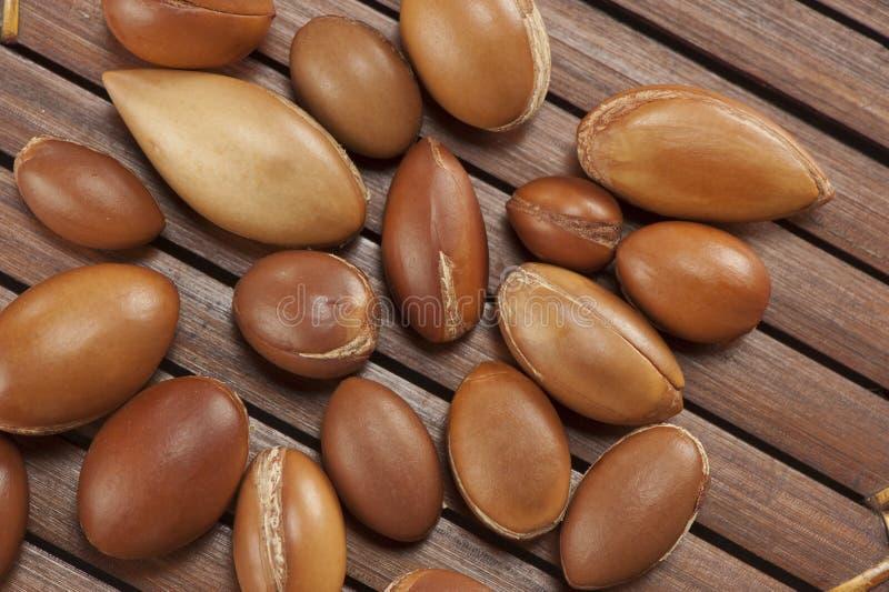 Sementes do argão, planta de Marrocos para o cosmético imagens de stock