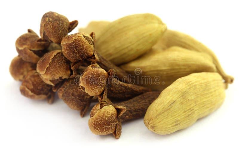 Sementes do cardamomo com cravos-da-índia foto de stock royalty free