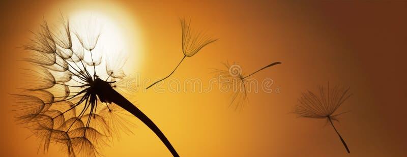 Sementes do dente-de-leão do voo em um fundo do por do sol imagens de stock