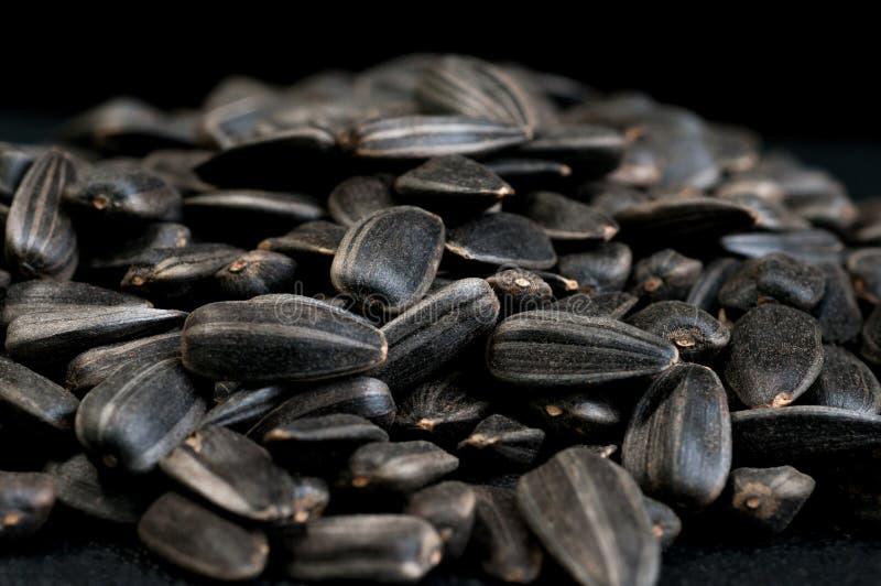 Sementes do girassol Textura da semente Orgânico roasted preto e branco imagens de stock royalty free