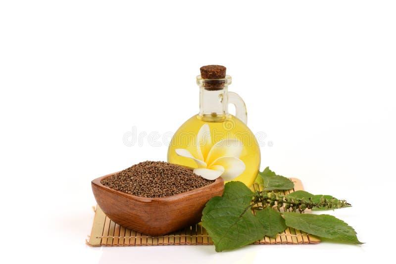 Sementes do Perilla e frutescens L do Perilla do óleo Britton fotos de stock royalty free