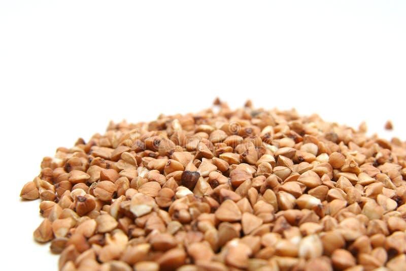 Sementes do trigo mourisco fotografia de stock