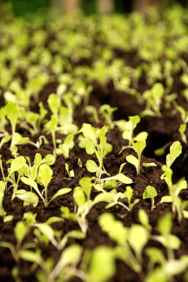 Sementes dos vegetais fotografia de stock royalty free