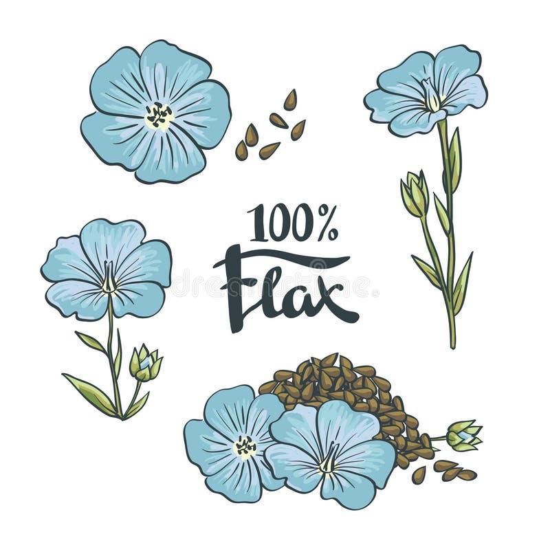 Sementes e flores de linho ilustração stock